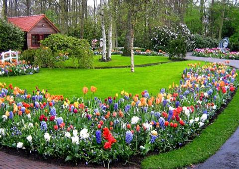 Голландия, в парке Keukenhof.