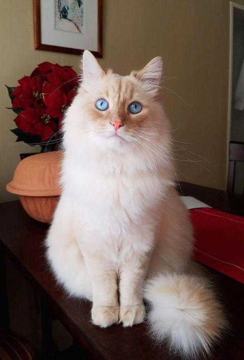 Этот кот настоящая принцесса…