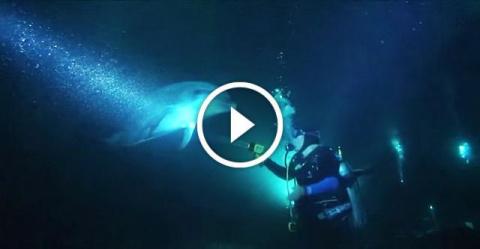 Дельфин попросил помощи у дайверов