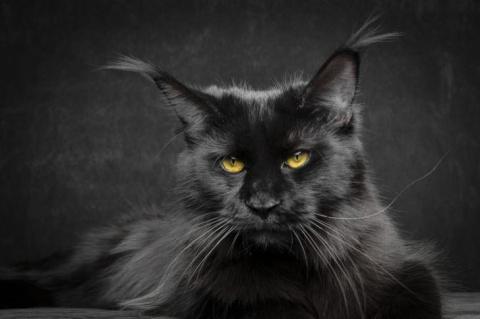 Подвальный кот спас своих со…