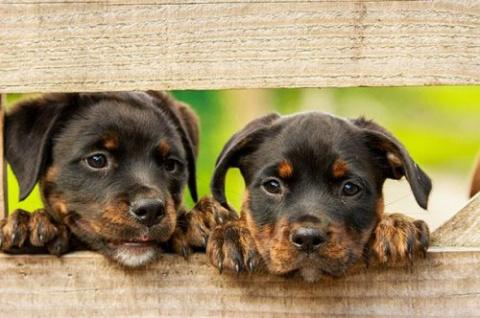 Очаровательные щенята