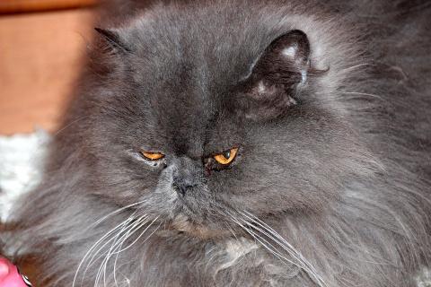 Домашний кот держал в страхе…