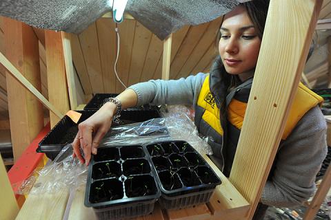 Проверенные способы улучшить всхожесть семян
