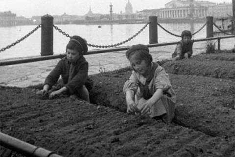 Урожай на газонах: как блокадный Ленинград спасал свою жизнь