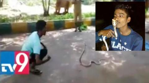Подросток из Индии скончался после попытки поцеловать кобру для селфи