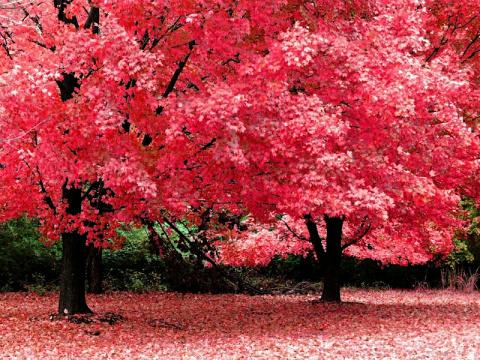 Времена года: осень. Народные средства