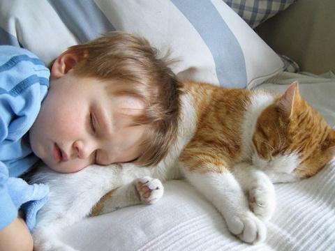 Для чего кошки ложатся спать…