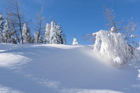 Сказочные фото зимнего леса, которые заставят вас снова влюбиться в зиму