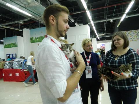 В Петрозаводске показали самых красивых кошек