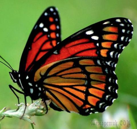 К чему залетает бабочка в кв…