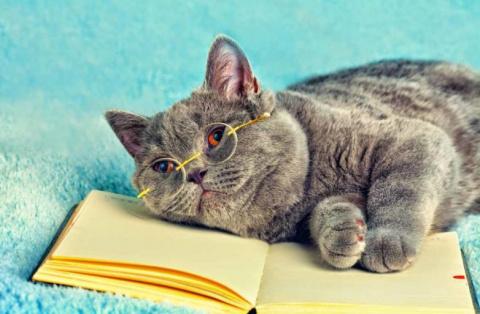 Как мыслят наши кошки