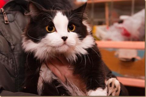 Счастливая история котенка Принц