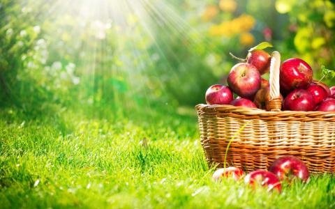 Дачные и огородные советы