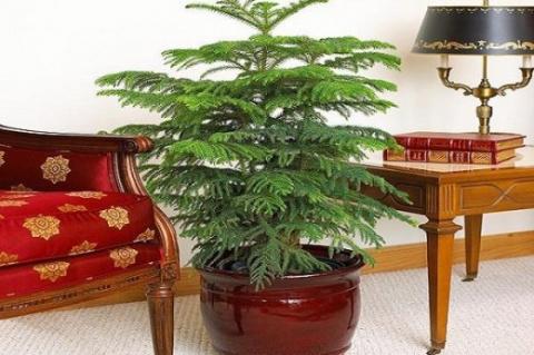 Комнатные растения с красивыми листьями и редким поливом