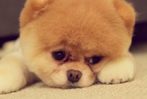 Топ-10 самых дорогих собак в мире