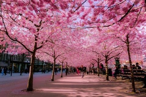 Самые яркие улицы весны