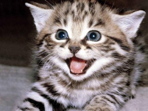 15 котов, которые покажут ва…