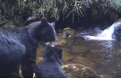 Мама, она и у медведей - мама!