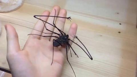 Видео от которого мурашки по…