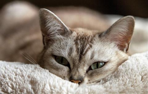Как ухаживать за котом/кошко…