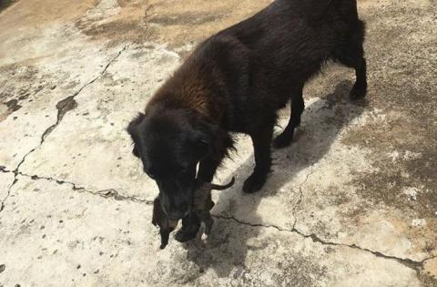 Замеченная за копошением в мусоре собака, как оказалось, спасала жизнь