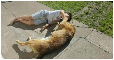 Трогательная встреча мальчика со своим псом спустя 8 месяцев после его пропажи