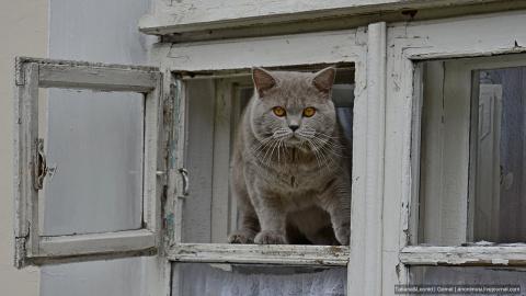 Утопили мы котят или равноду…