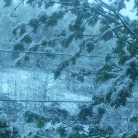 Снежное лето: в Мурманске сн…