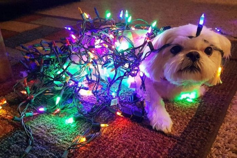 Животные в ожидании Рождеств…