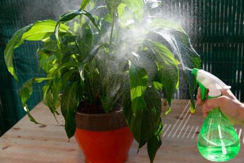 Как бороться с тлей на комнатных растениях: народные средства