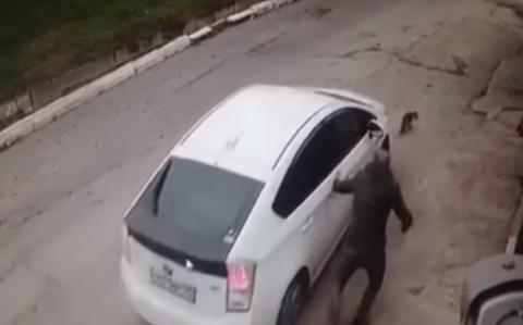 Во Владивостоке автоледи не позволила спасти собаку из-под колес машины