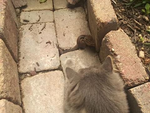 Кошка и бурундук стали лучши…