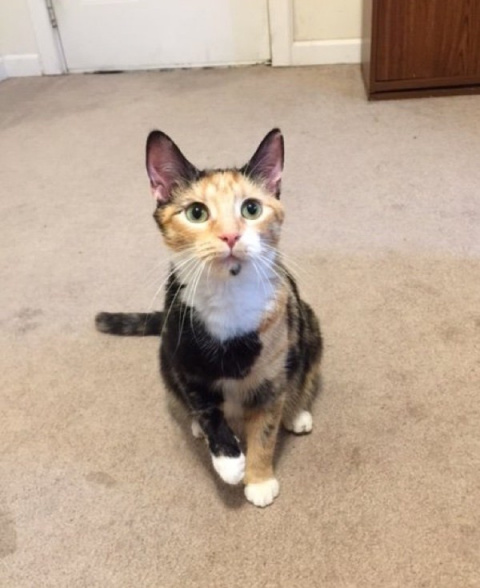Беременная кошка пришла к людям и попросила приюта