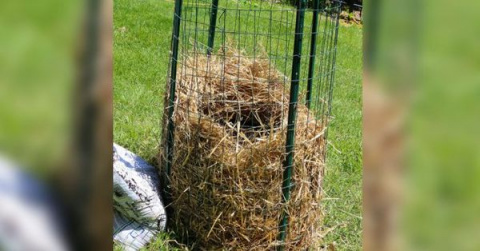 Новый метод выращивания нескончаемого запаса картошки прямо у Вас дома!