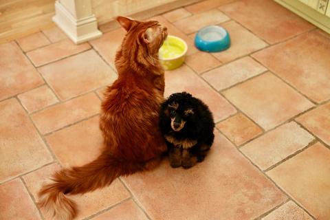 Где у пуделя мотив «как я с тобой счастлив» – у кота «как я без тебя страдал»!