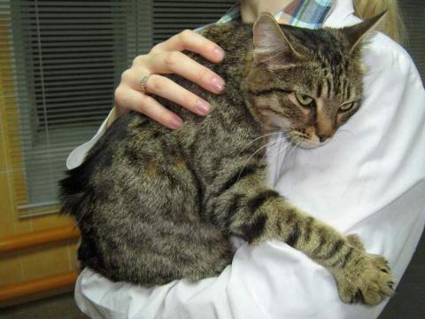 """""""Неправильно ты лекарства пьёшь"""". Фельдшер — о том, что думают о пациентах коты"""
