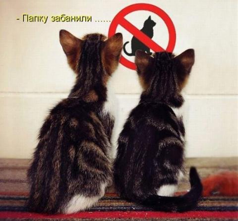 Забавные коты, которые умеют…