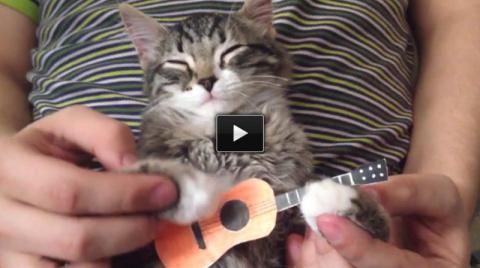 Почему люди любят видео с котиками?