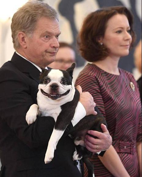 Улыбающаяся собака президента Финляндии стала звездой соцсетей