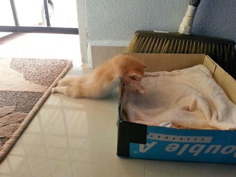 Мне здесь удобно! Кошки, кот…