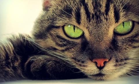 Криминальный кот : история от врача тюремной больницы.