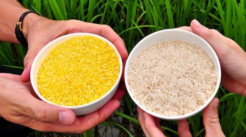 Более 100 нобелевских лауреатов выступили в защиту ГМО