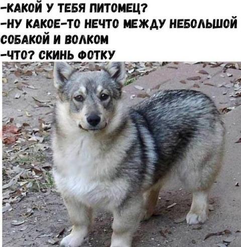 Демотиваторы и точка!))