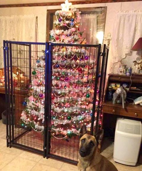 Как сберечь новогоднюю ёлку