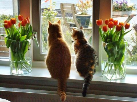 Готовим окна к весне: отмываем до блеска