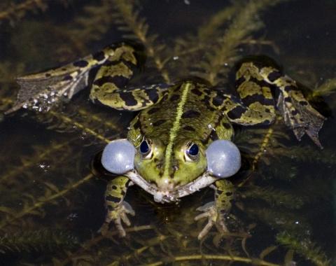 ТЕРЕМОК. Занимательно о лягушках