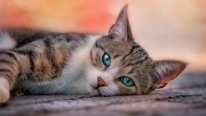 Найди кота: пушистый квест 2