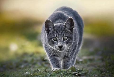 Призрак брошенной кошки. История