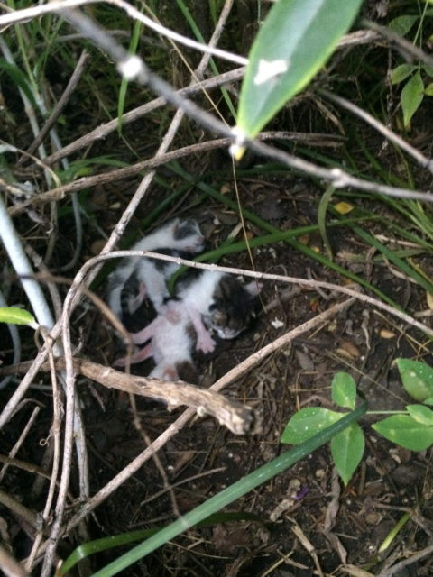 Девушка нашла в кустах новор…