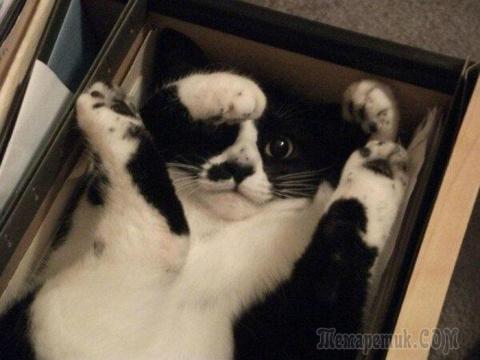 Коты, которые очень любят коробки